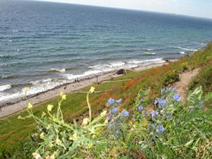 Der Steilhang zur Ostsee herunter am Platz der Steinsetzung von Kaseberga